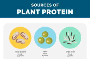 plant protein cover